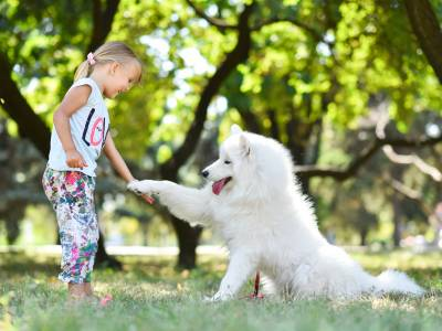 Introducing Dog Therapy in Ukraine
